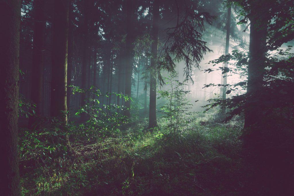 Neliečiamas miškas