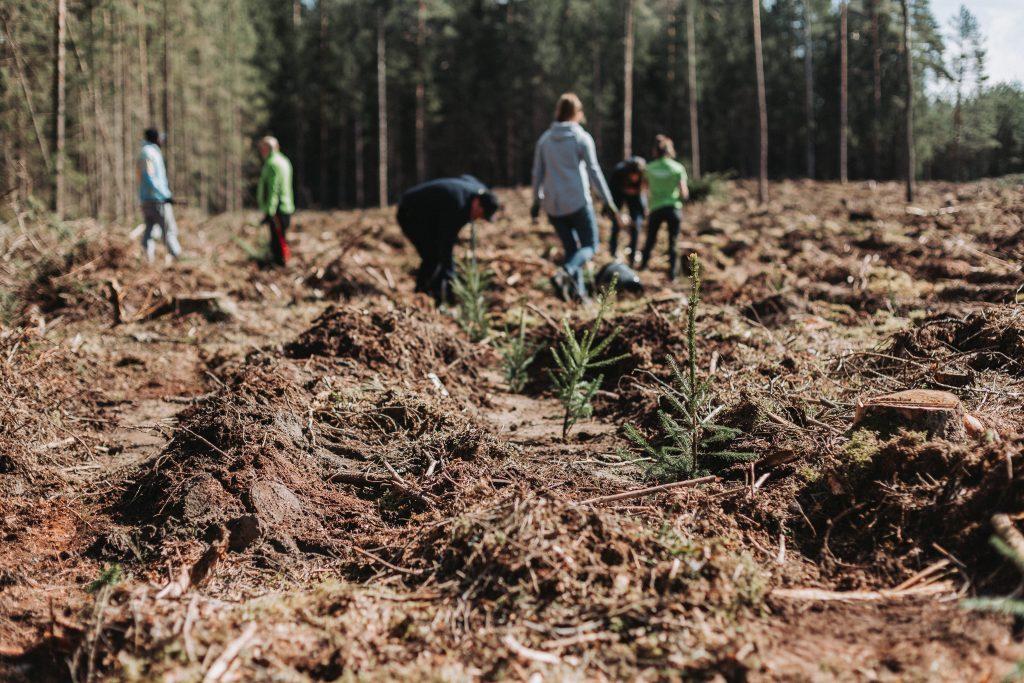 Šalčininkų rajone pasodinome daugiau nei 10 tūkst. medžių